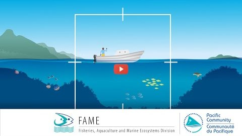 How to survey common invertebrates found in coastal marine habitats?