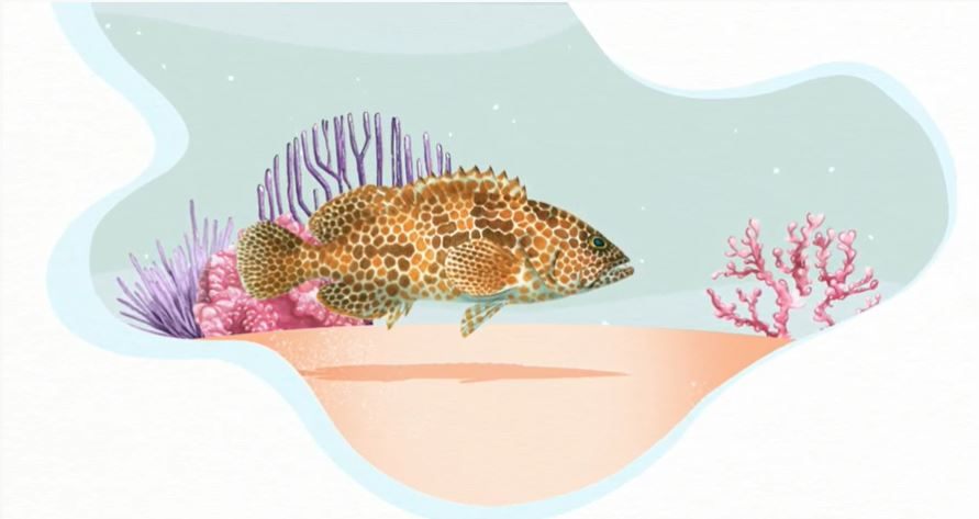 The Fisher's Tales 03 (English): The most important love story of the ocean. (Grouper).
