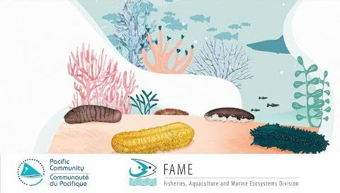 The Fisher's Tales 02 (English): Do you know how sea cucumbers protect the ocean?