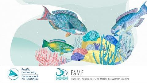 The Fisher's Tales 01 (Tuvaluan): Do you know that parrotfish act like architect of the reef?