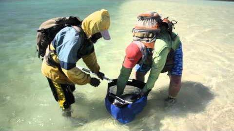 How to handle bonefish