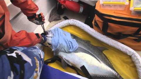 Pêche sportive et manipulation des prises