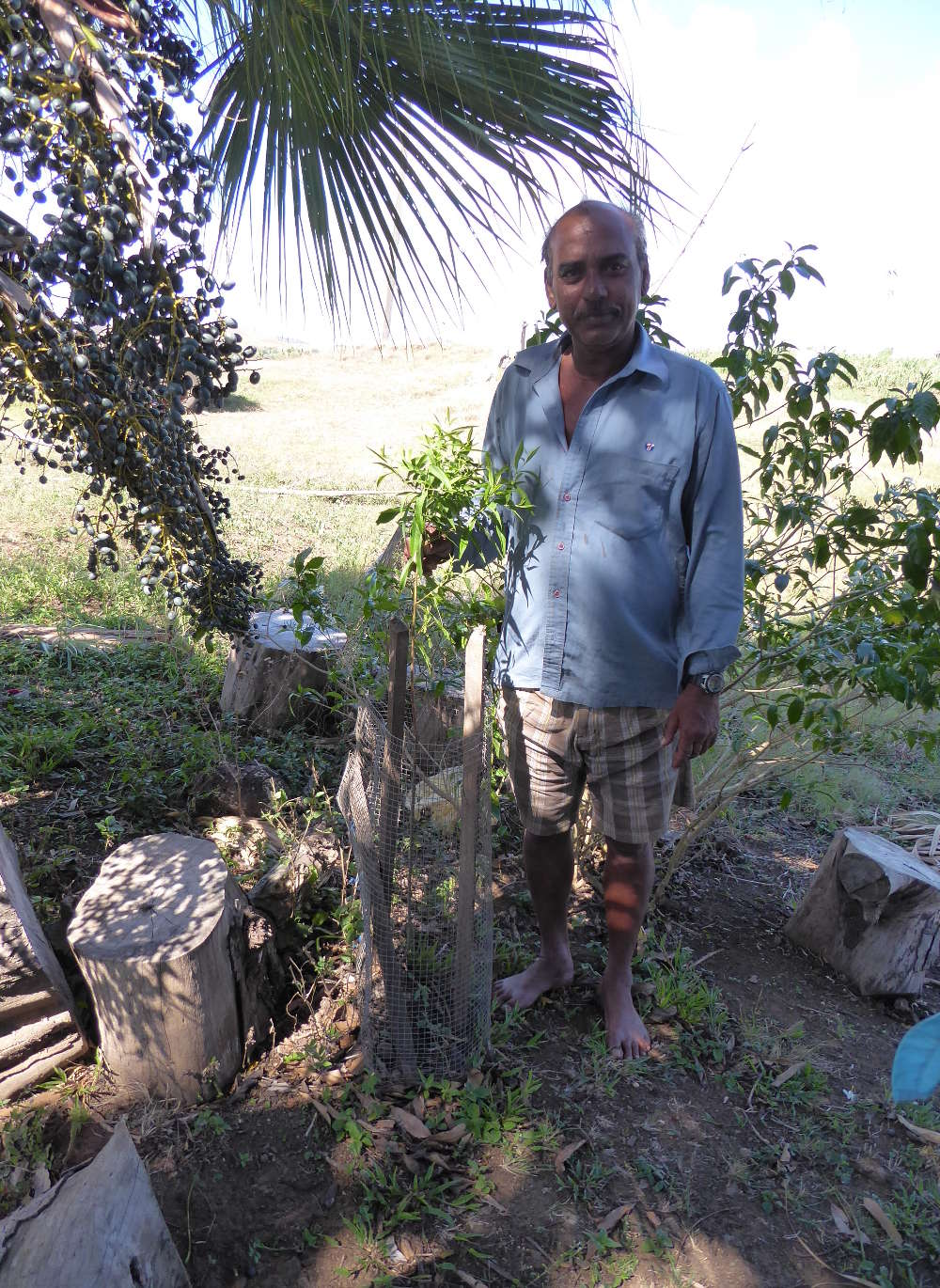 Prakash Chand proudly showing one of his exceptionally tall Yasi (sandalwood) saplings