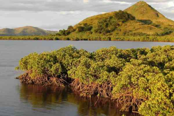 RESCCUE activity in Fiji: mangroves restauration