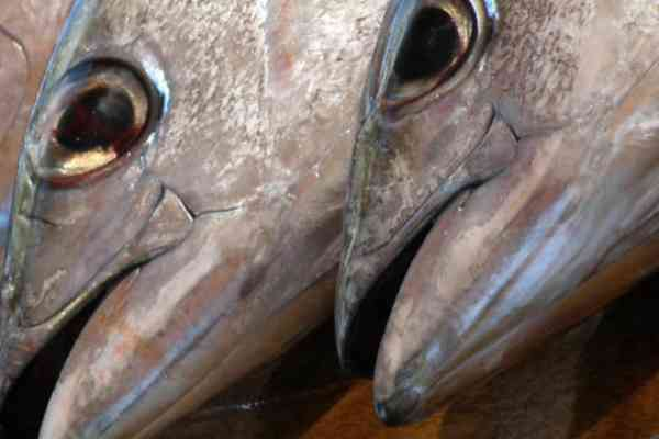 Size, species, capture location: What makes tuna get high on mercury?
