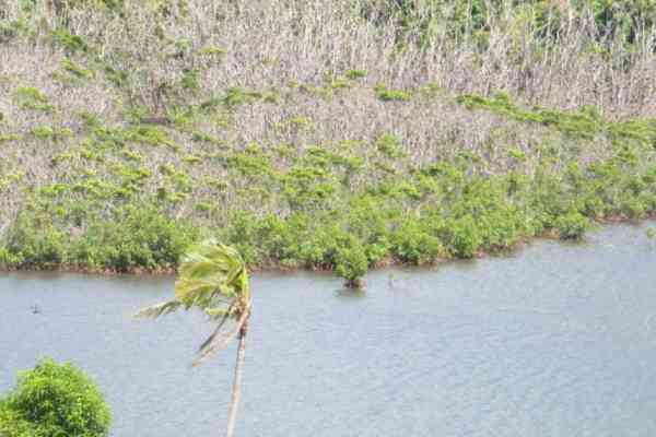 Mangroves degraded by cyclone Winston Ra Province Fiji (©RESCCUE SPC)
