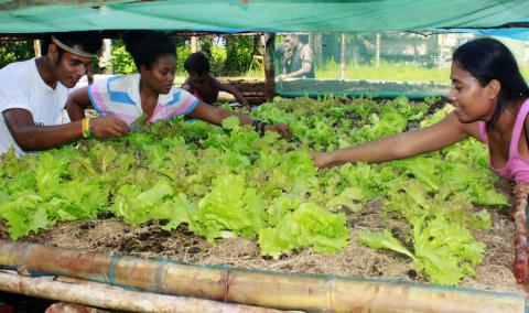 Young people in Wagina tending their vegetables - Photo: Emmanuel Oti