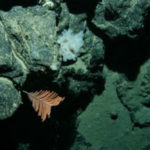 Deep sea minerals frameworks to inform decision-making