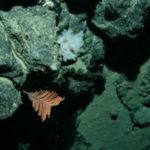 Deep sea minerals frameworks to inform decision-making