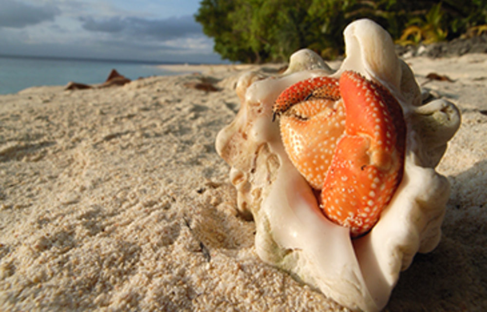Launch of Pacific Ridge to Reef programme