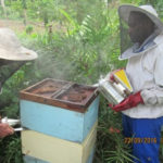 Vanuatu paravet trainees successfully complete summer school
