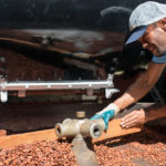 Fiji cocoa farms receive recovery assistance