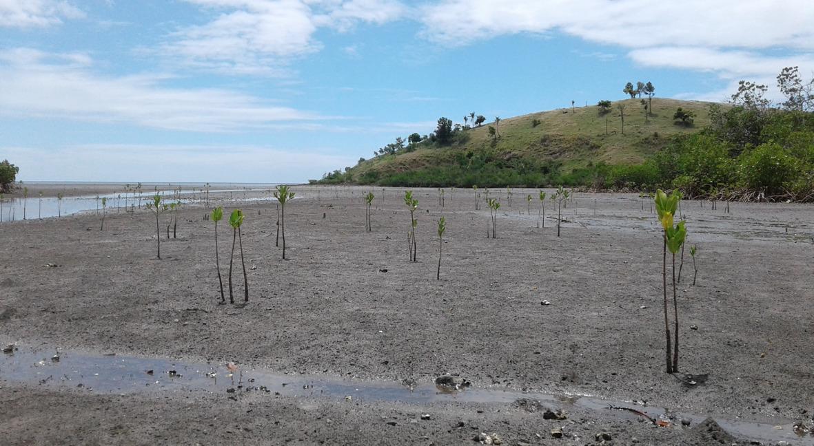 Seedlings,Fiji
