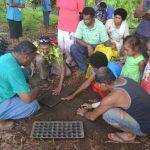 Zoom – Plantations ciblées aux Fidji
