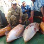 Une étude sur la pêche vient compenser le manque crucial de données