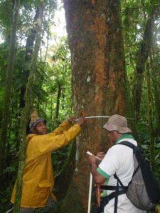 cccpir-fiji-forestry