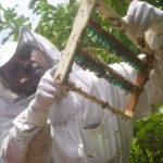 Training to increase honey production Post TC Winston