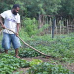 Zoom – Vanuatu farmers dig for policies online