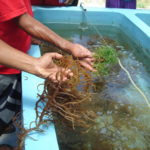 Workshop aims to strengthen Pacific aquatic biosecurity