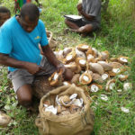 Value chain workshop to propel growing coconut industry in the Pacific