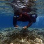 Évaluation des holothuries à Pohnpei: la CPS prête main-forte aux États fédérés de Micronésie