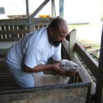 Launch of para-veterinarian training in Palau