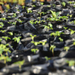 Thousands of seedlings provided to help devastated communities get back on their feet