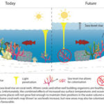 Concern over dead fish in Fiji and Vanuatu