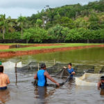 Regional Collaboration for the Sustainable Development of Sandfish Aquaculture in the Pacific
