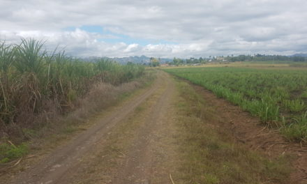Cane Access Road upgrade to benefit 366 sugarcane farmers in Koronubu, Ba