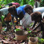 International Women's Day – Rural women are defining Pacific Resilience